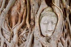 Buddha head in the tree Stock Photos