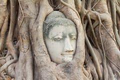 Buddha head in tree Stock Photos