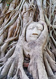 Buddha head in tree roots. A Buddha statue hidden in tree roots in Thailand Royalty Free Stock Images