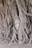Buddha head in tree roots Royalty Free Stock Photography
