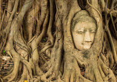 Buddha head in the tree roots. Ancient Buddha head in the tree roots. Ayutthaya, Thailand Stock Images