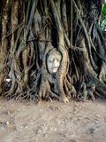 Buddha head in tree roots Stock Photography