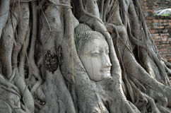 Buddha head in tree roots (Ayutthaya). This budhha head can be seen in the The Ayutthaya historical park, which covers the ruins of the old city of Ayutthaya Stock Photo