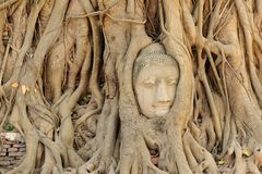 Buddha head in tree roots at ayutthaya Royalty Free Stock Images