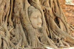 Buddha head in tree roots at ayutthaya Stock Photos