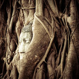 Buddha Head in the tree roots. Ayutthaya, Thailand Royalty Free Stock Images