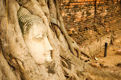 Buddha head in tree roots. Buddha head In the big wooden roots at Thai temples Stock Photos