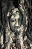 Buddha Head in Tree Roots. Ruins of Wat Mahathat, UNESCO World Heritage, Ayutthaya, Thailand Royalty Free Stock Photography