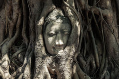 Buddha Head in Tree Roots. Ruins of Wat Mahathat, UNESCO World Heritage, Ayutthaya, Thailand stock image