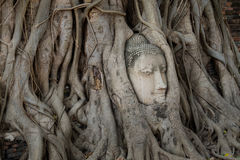 Buddha head in tree roots at the temple. Ayutthaya, Thailand stock images