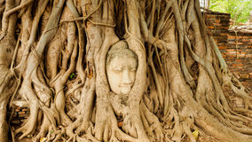 Buddha head in tree roots. - temple thailand. Buddha head In the big wooden roots at Thai temples. Ancient Buddha at Ayutthaya,Thailand Stock Photo