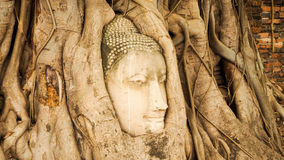 Buddha head in tree roots. - temple thailand. Buddha head In the big wooden roots at Thai temples. Ancient Buddha at Ayutthaya,Thailand Stock Image