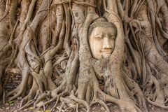 Buddha Head in Tree Roots in Wat Mahathat, Ayuthaya Royalty Free Stock Photography