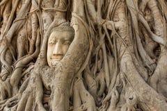 Buddha Head in Tree Roots in Wat Mahathat, Ayuthaya Stock Image