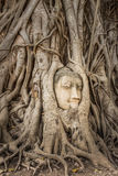 Buddha Head in Tree Roots in Wat Mahathat , Ayuthaya Royalty Free Stock Photo