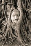 Buddha Head in Tree Roots in Wat Mahathat Stock Photography