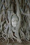 Buddha Head in Tree Roots, Wat Mahathat, Ayuttaya. THAILAND. Stock Photos