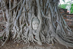 Buddha Head in Tree Roots, Wat Mahathat, Ayuttaya. THAILAND.Trip of PhiPhi and Krabi Islands. THAILAND. Royalty Free Stock Photography