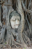 Buddha Head in Tree Roots, Wat Mahathat, Ayutthaya. This ancient temple was built during the 14th century, but was reduced to ruins in 1767 when the Burmese army stock photo
