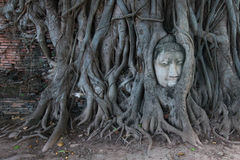 Buddha Head in Tree Roots, Wat Mahathat, Ayutthaya. This ancient temple was built during the 14th century, but was reduced to ruins in 1767 when the Burmese army stock image