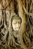 Buddha Head in Tree Roots, Wat Mahathat, Ayutthaya stock photography
