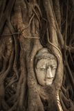 Buddha Head in Tree Roots royalty free stock photos