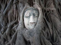 Buddha head in tree roots at Wat Mahathat, Ayutthaya, Thailand. Royalty Free Stock Photos