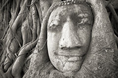 Buddha head in tree roots at Wat Mahathat, Ayutthaya, Thailand. Stock Images