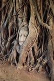 Buddha Head in the Tree Stock Photo