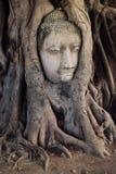 Buddha Head in the Tree Royalty Free Stock Photos