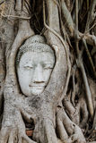 Buddha head in a tree trunk Stock Photo