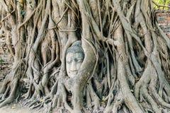 Buddha head in tree Royalty Free Stock Image