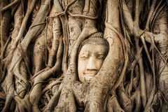 Buddha Head Tree Wat Maha That Ayutthaya. buddha statue trapped in Bodhi Tree roots. Ayutthaya historical park Royalty Free Stock Image