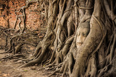 Buddha Head Tree Wat Maha That Ayutthaya. buddha statue trapped in Bodhi Tree roots. Ayutthaya historical park Stock Image