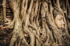 Buddha Head Tree Wat Maha That Ayutthaya. buddha statue trapped in Bodhi Tree roots. Ayutthaya historical park Royalty Free Stock Photos