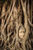 Buddha Head Tree Wat Maha That Ayutthaya. Buddha Statue Trapped In Bodhi Tree Roots. Ayutthaya Historical Park Royalty Free Stock Image