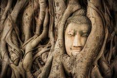 Buddha Head Tree Wat Maha That Ayutthaya. Buddha Statue Trapped In Bodhi Tree Roots. Ayutthaya Historical Park Royalty Free Stock Photos
