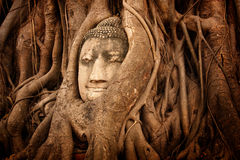 Buddha head in tree Wat Mahathat, Ayutthaya Stock Images