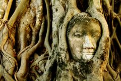 Buddha head in Tree at Wat Mahathat, Ayutthaya, Thailand Stock Photography