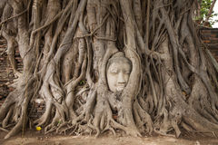 Buddha head in a tree Royalty Free Stock Photography