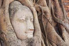 Buddha Head in the Wat Maha That temple in Ayutthaya, Thailand Royalty Free Stock Images