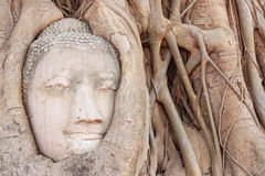 Buddha Head in the Wat Maha That temple in Ayutthaya, Thailand Royalty Free Stock Photos