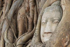 Buddha Head in the Wat Maha That temple in Ayutthaya, Thailand Royalty Free Stock Photography