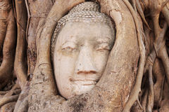 Buddha Head in the Wat Maha That temple in Ayutthaya, Thailand Stock Image