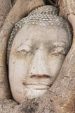 Buddha Head in the Wat Maha That temple in Ayutthaya, Thailand Stock Photo