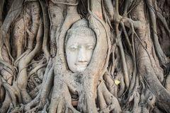 Buddha head in Wat Mahathat Royalty Free Stock Image