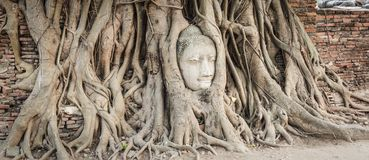 Buddha head in Wat Mahathat Stock Images