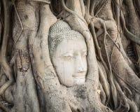 Buddha head in Wat Mahathat Stock Photo