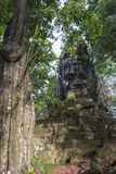 Buddha heads in the jungle Royalty Free Stock Images