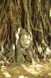 Buddha huvud Royaltyfri Fotografi